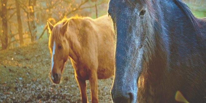caballos2