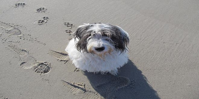 dog-403699_1280 (Copy)