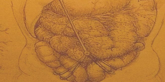 Uno de sus dibujos de anatomía