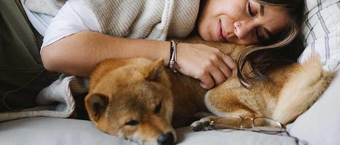 los perros sueñan como los humanos