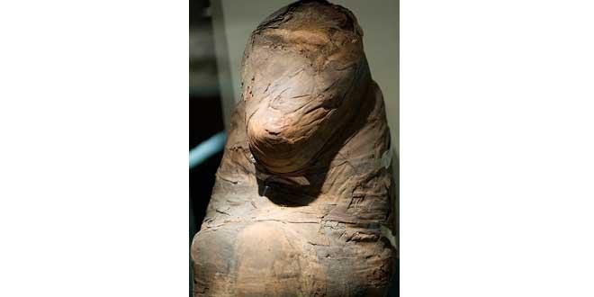 momia babuino