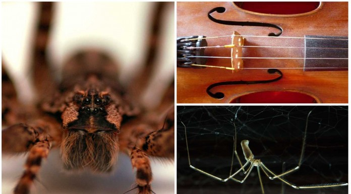 5 cosas que no sabías de las arañas