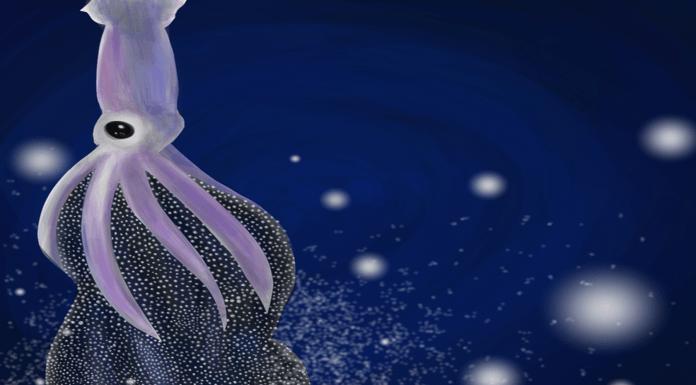 """Descubre cómo es el """"parto"""" de un calamar gigante: ¡Maravilloso!"""