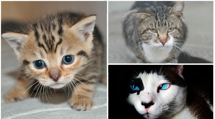 Las enfermedades más comunes de los gatos