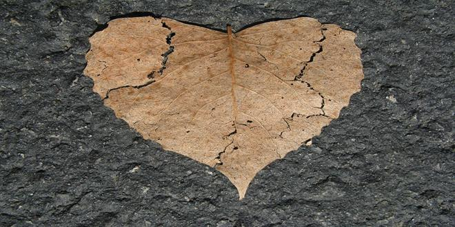 heart-742712_1280 (Copy)