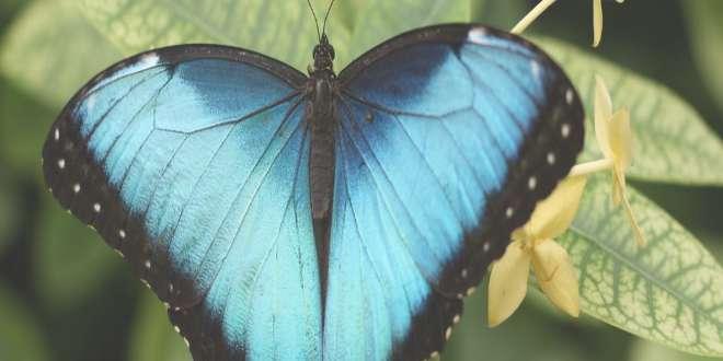 Una mariposa