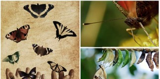mariposas increíbles