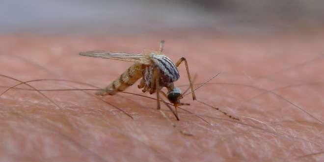 mosquito picadura