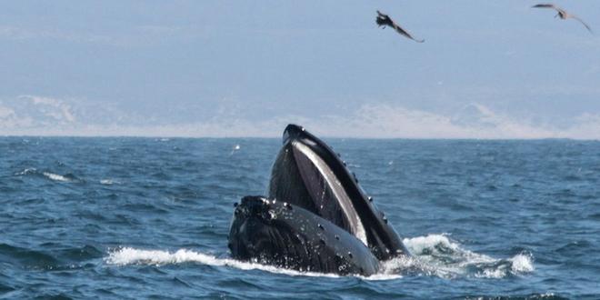 Se puede vivir en el interior de una ballena?
