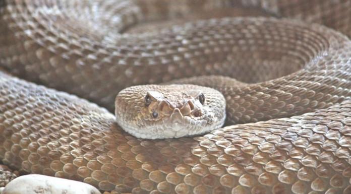 ¡¡Sorprendente fósil de serpiente con 4 patas!!