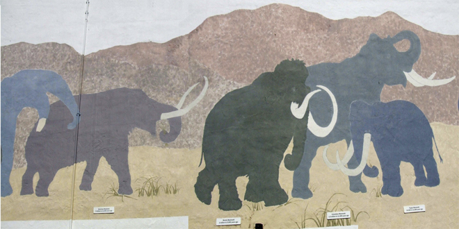 Variedades de mamuts