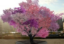 El árbol Frankenstein | Crecen más de 40 tipos de fruta