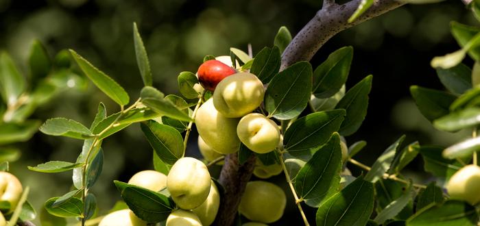 El árbol Frankenstein produce más de 40 tipos de fruta