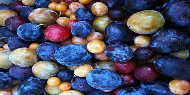 HT_stone_fruit_tree_2_jtm_140723_4x3_992 (Copy)