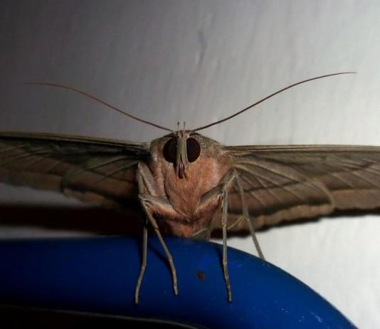 La mariposa del país de los muertos