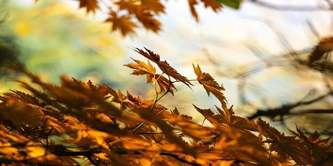 autumn-507544_1280 (Copy)