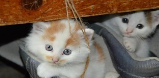 Crean música para gatos: ¡Descubre las 3 melodías con más éxito!