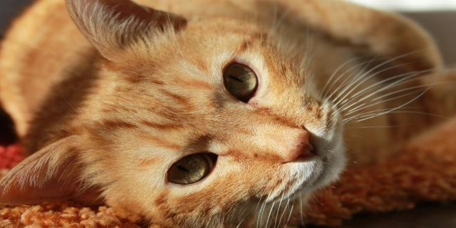 cat-636172_1920 (Copy)