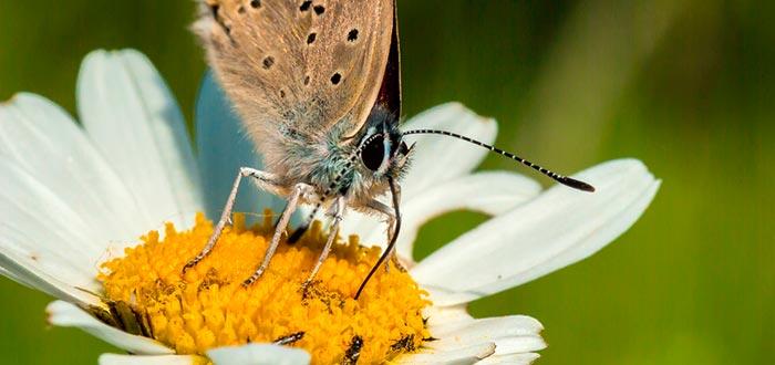 curiosidades sobre las mariposas, sensores del gusto en las patas