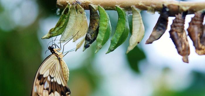 curiosidades sobre las mariposas, mariposa recién nacida