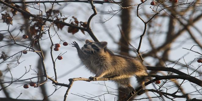 en árbol