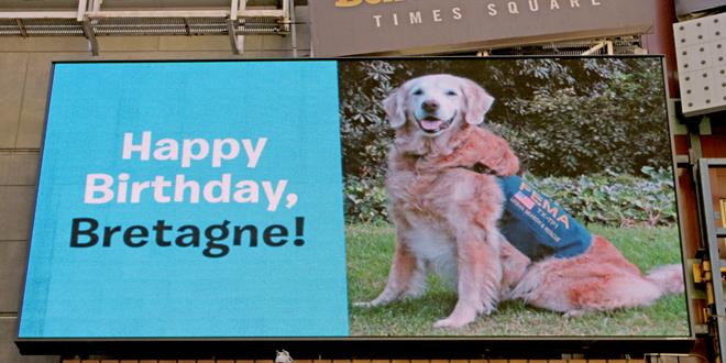 Bretagne, the 9/11 search dog from Ground Zero, turns 16. She and her family are greeted in New York City's Times Square with a billboard of themselves and welcome message.