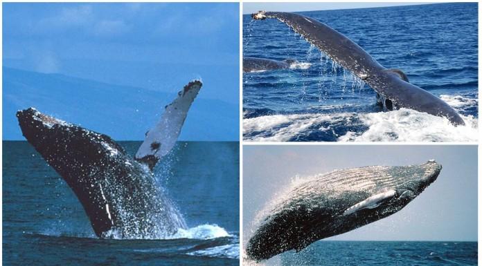 3 singularidades desconocidas sobre las ballenas