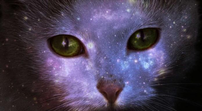 La gatita Broken, un caso del que tomar conciencia