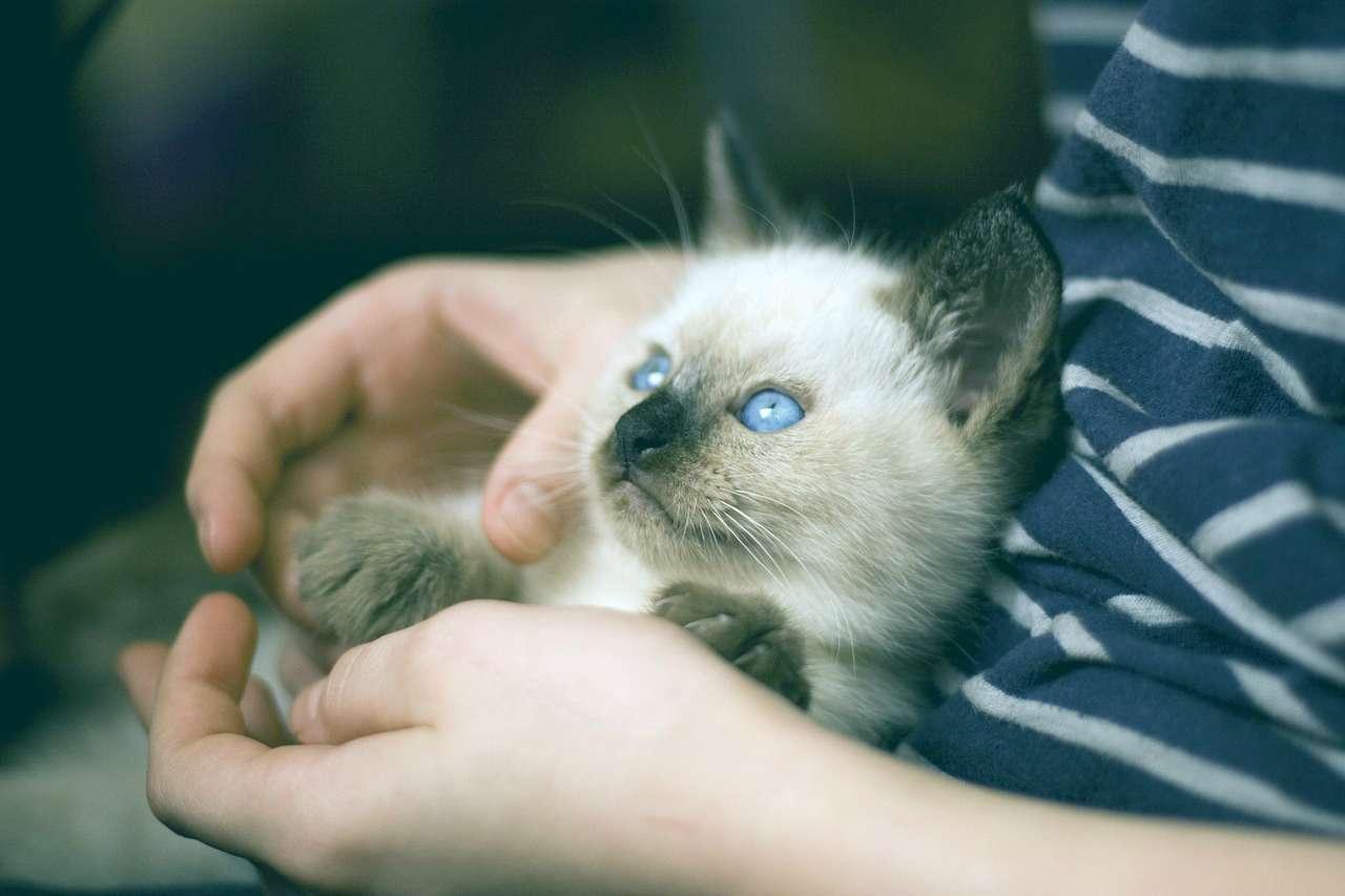 Un nio sostiene un gato en sus manos.