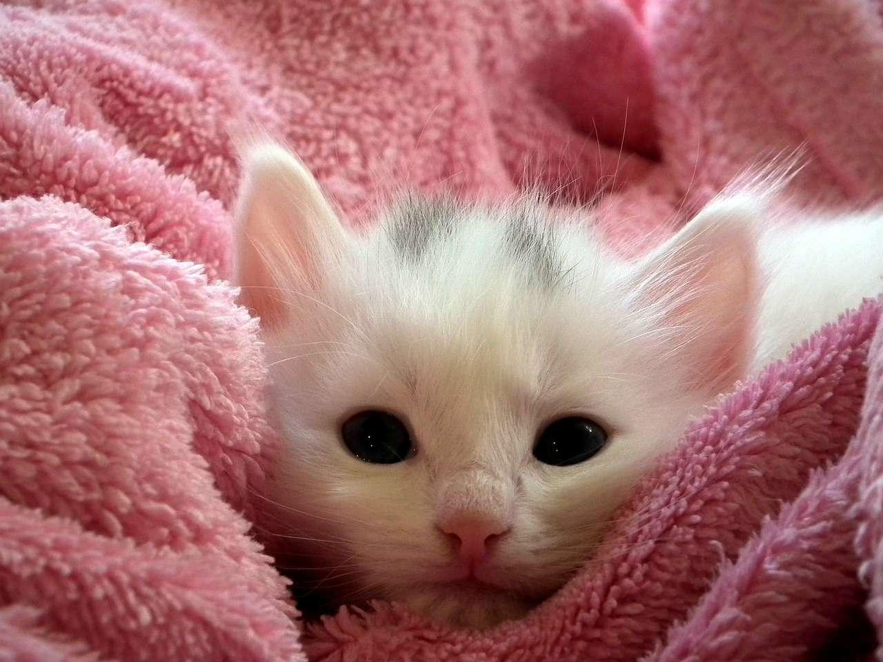 Los gatos son unos adorables animales de compañía.