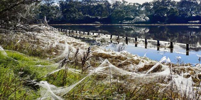 a-rain-of-spiders-that-caused-terror-in-australia (Copy)