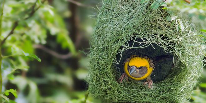 animal-architecture-nests-8-3-1 (Copy)
