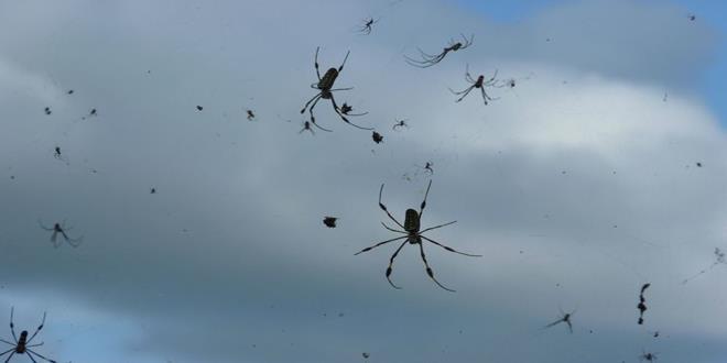 arañas lluvia (Copy)