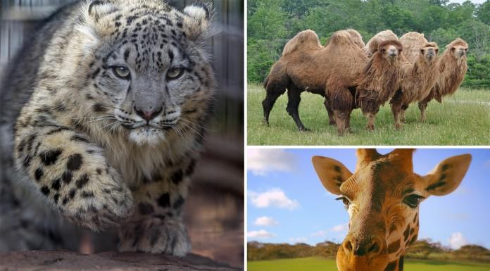15 curiosidades de animales que te asombrarán