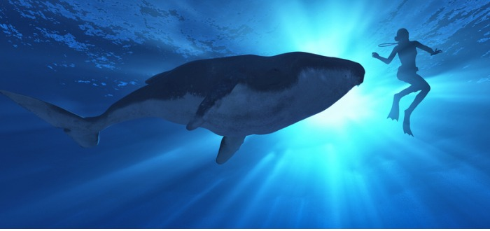todo sobre las ballenas