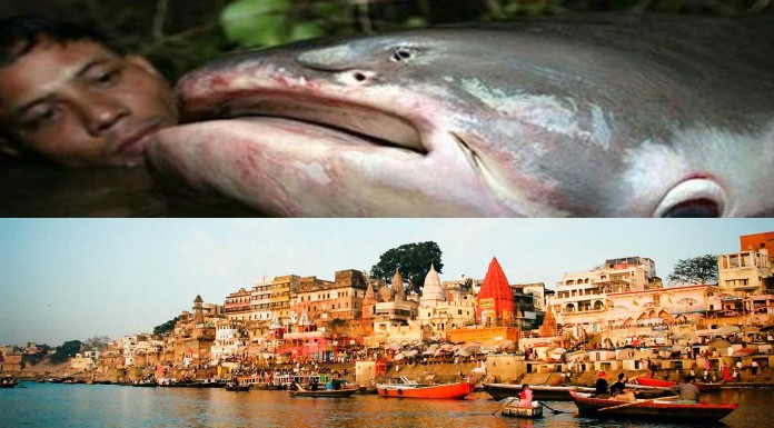 ¿Te atreves a conocer al pez necrófago de la India?