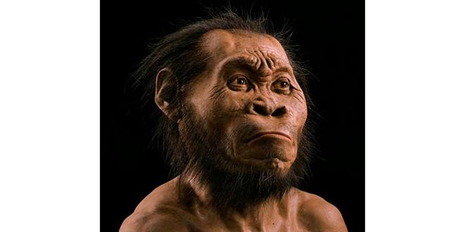 Reconstrucción realizada por el equipo de científicos de National Geographic, basada en los cráneos encontrados