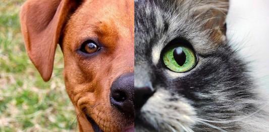TEST: ¿Eres más felino o canino?