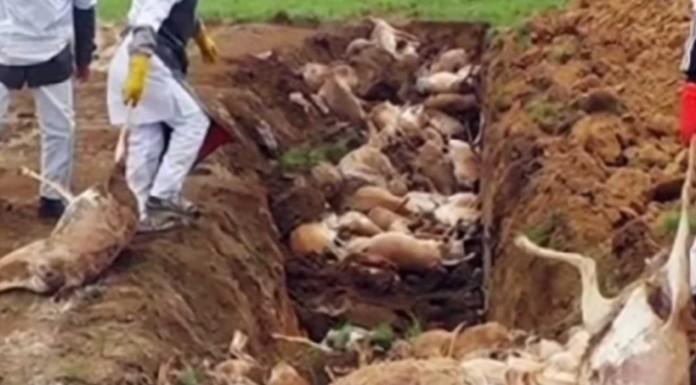 Extraña muerte masiva y repentina de antílopes en Kazajistán