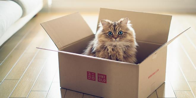 cat-box-ben-torode-cute-lovely-kitten-animal-floor-wallpaper- (Copy)