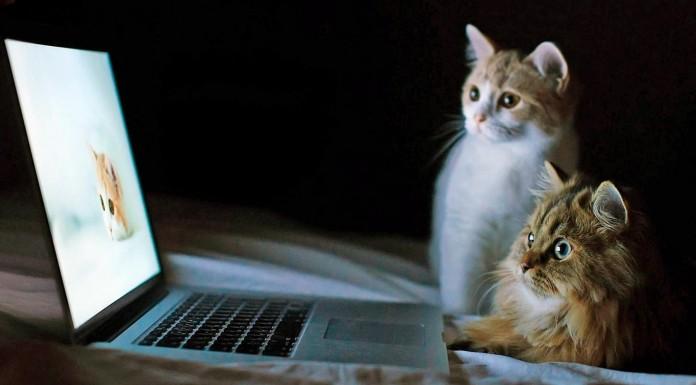 5 cosas que solo sabemos los que tenemos gato