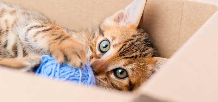 cosas que solo sabemos los que tenemos gato