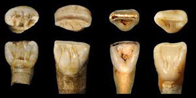 Los dientes hallados en la cueva