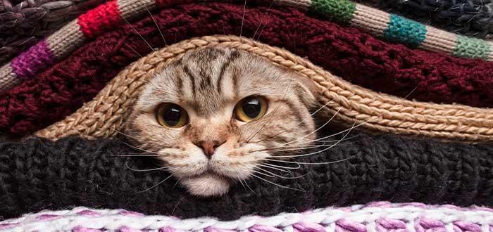 gatos entre la ropa