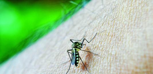 ¿Por qué los mosquitos pican más a unas personas que a otras?