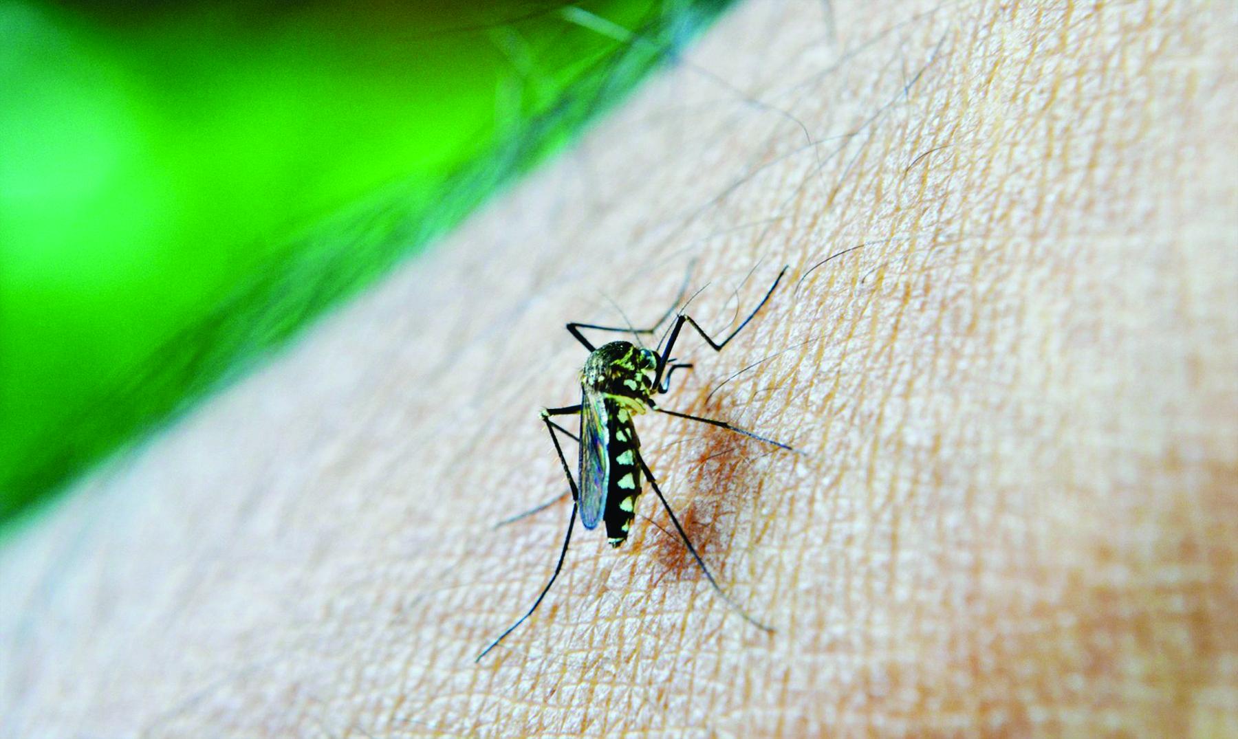 Por qué los mosquitos me pican más?
