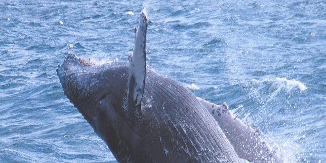 orcasvs2