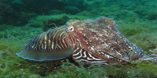 squid-225423_1280