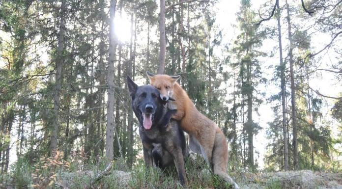 Tinni y Snusen, dos amigos muy especiales