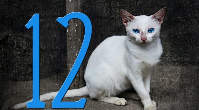 12 datos que no sabías sobre los gatos